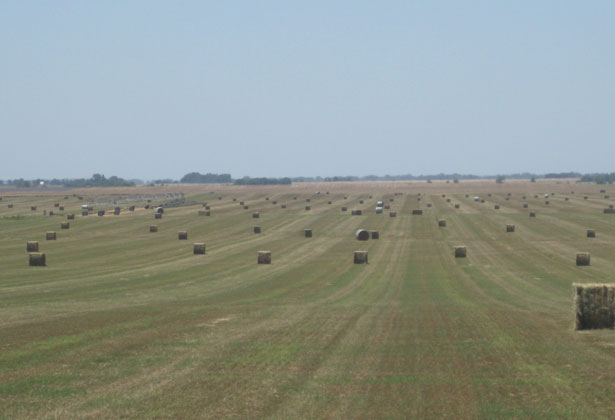 Long Kansas Hay Field